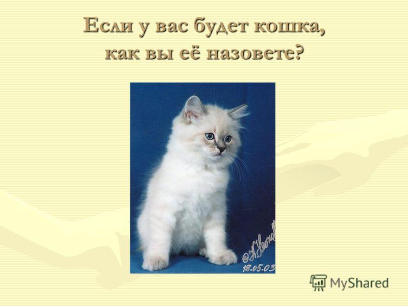 Если у вас будет кошка, как вы её назовете?