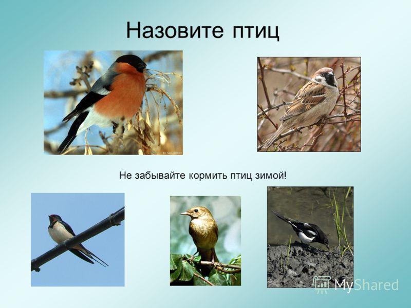 Назовите птиц Не забывайте кормить птиц зимой!
