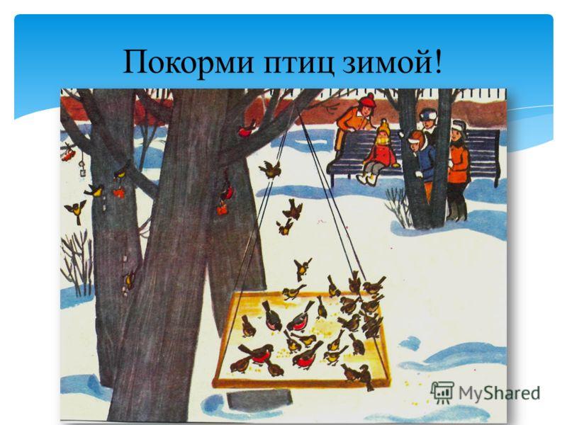 Покорми птиц зимой!