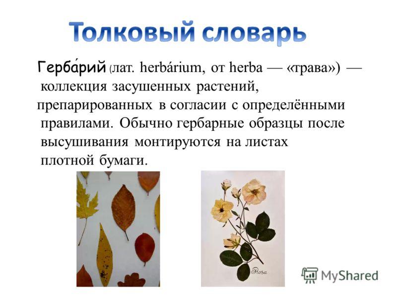 Гербарий ( лат. herbárium, от herba «трава») коллекция засушенных растений, препарированных в согласии с определёнными правилами. Обычно гербарные образцы после высушивания монтируются на листах плотной бумаги.