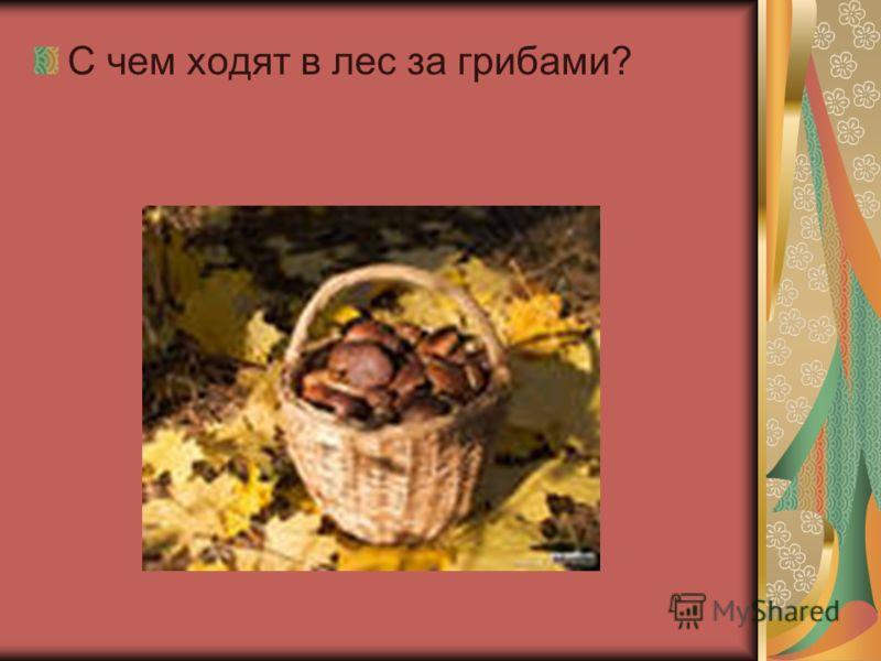С чем ходят в лес за грибами?
