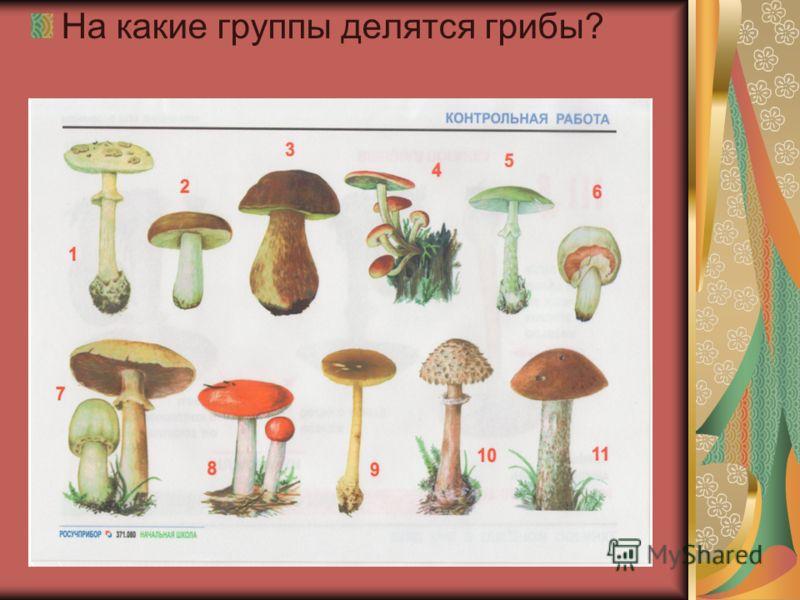 На какие группы делятся грибы?
