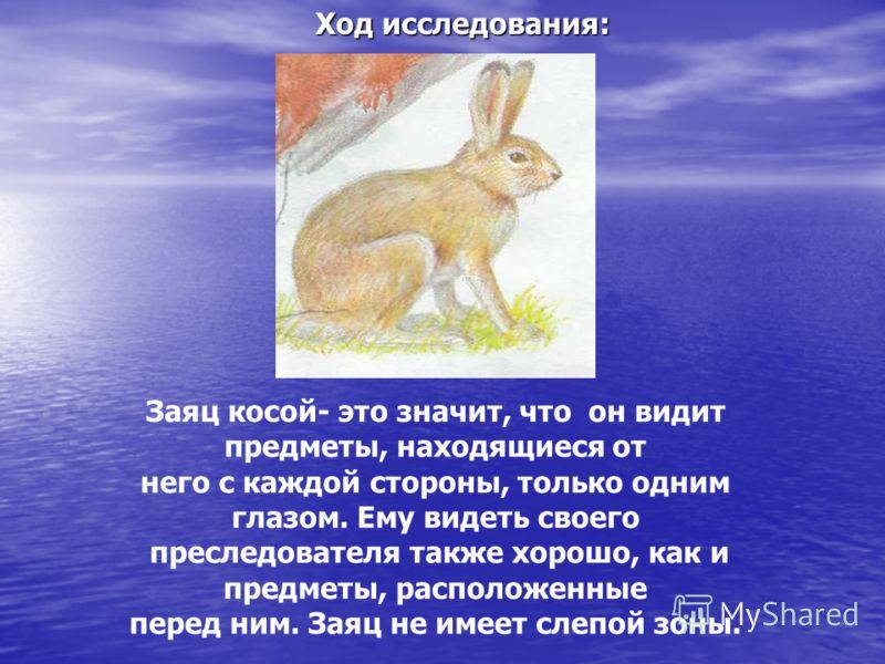Заяц косой- это значит, что он видит предметы, находящиеся от него с каждой стороны, только одним глазом. Ему видеть своего преследователя также хорошо, как и предметы, расположенные перед ним. Заяц не имеет слепой зоны. Ход исследования:
