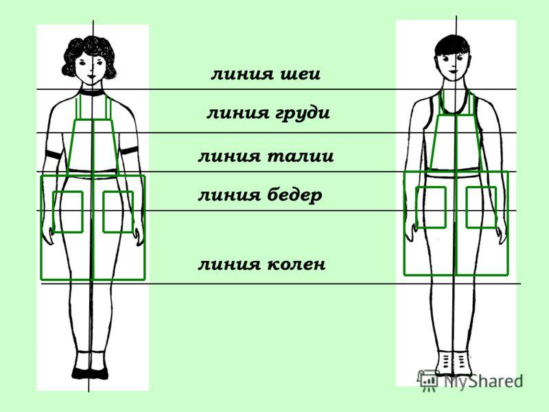 линия груди линия шеи линия талии линия колен линия бедер