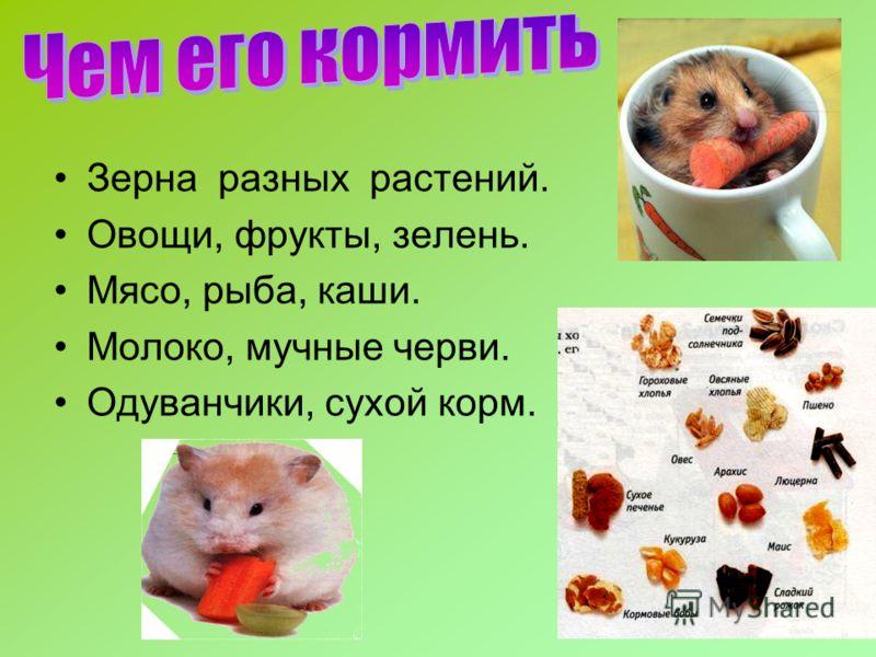 Зерна разных растений. Овощи, фрукты, зелень. Мясо, рыба, каши. Молоко, мучные черви. Одуванчики, сухой корм.