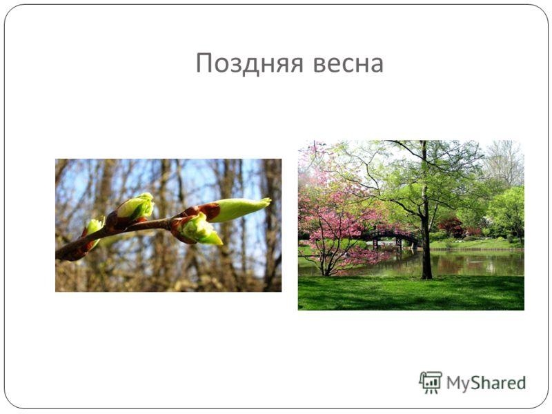 Поздняя весна