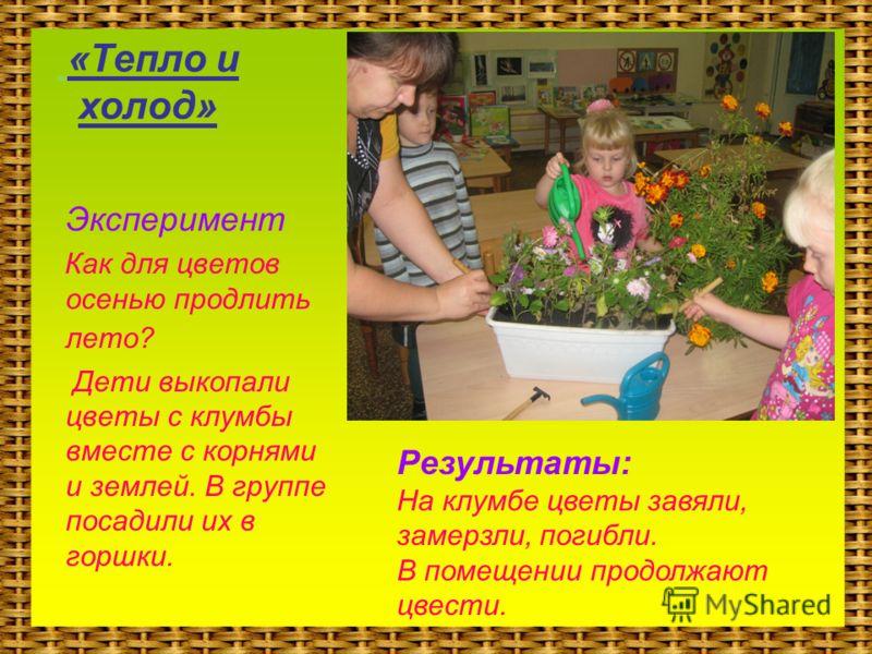 «Тепло и холод» Эксперимент Как для цветов осенью продлить лето? Дети выкопали цветы с клумбы вместе с корнями и землей. В группе посадили их в горшки. Результаты: На клумбе цветы завяли, замерзли, погибли. В помещении продолжают цвести.