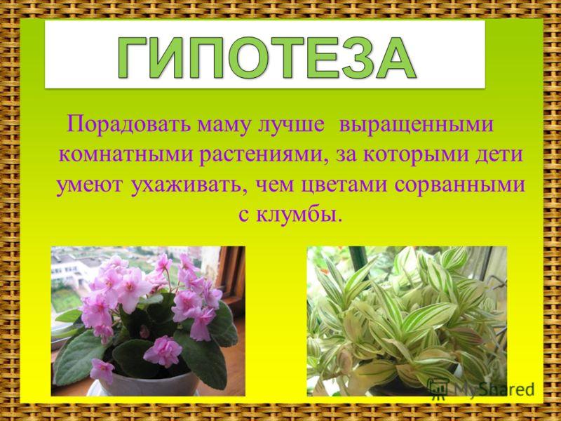 Порадовать маму лучше выращенными комнатными растениями, за которыми дети умеют ухаживать, чем цветами сорванными с клумбы.
