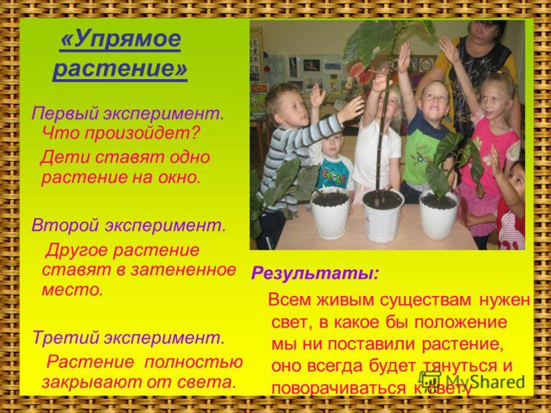 «Упрямое растение» Первый эксперимент. Что произойдет? Дети ставят одно растение на окно. Второй эксперимент. Другое растение ставят в затененное место. Третий эксперимент. Растение полностью закрывают от света. Результаты: Всем живым существам нужен