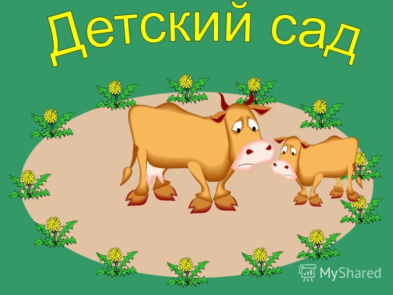 Корова за телёнком.