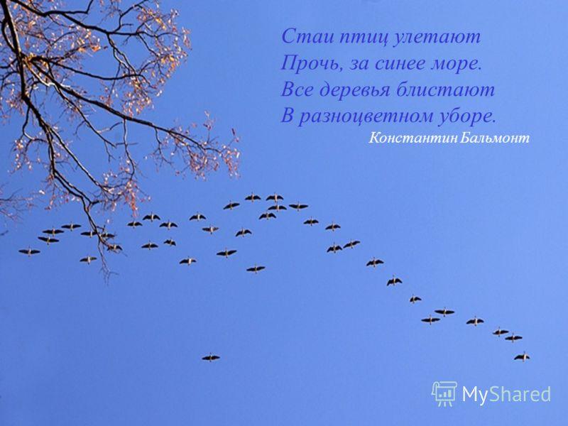 Стаи птиц улетают Прочь, за синее море. Все деревья блистают В разноцветном уборе. Константин Бальмонт