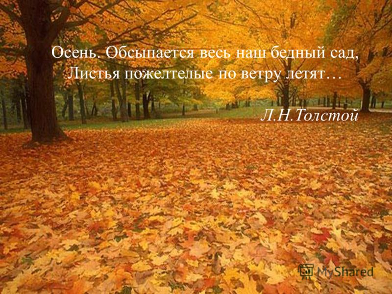 Осень. Обсыпается весь наш бедный сад, Листья пожелтелые по ветру летят… Л.Н.Толстой