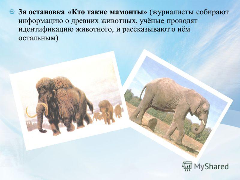 3я остановка «Кто такие мамонты» (журналисты собирают информацию о древних животных, учёные проводят идентификацию животного, и рассказывают о нём остальным)