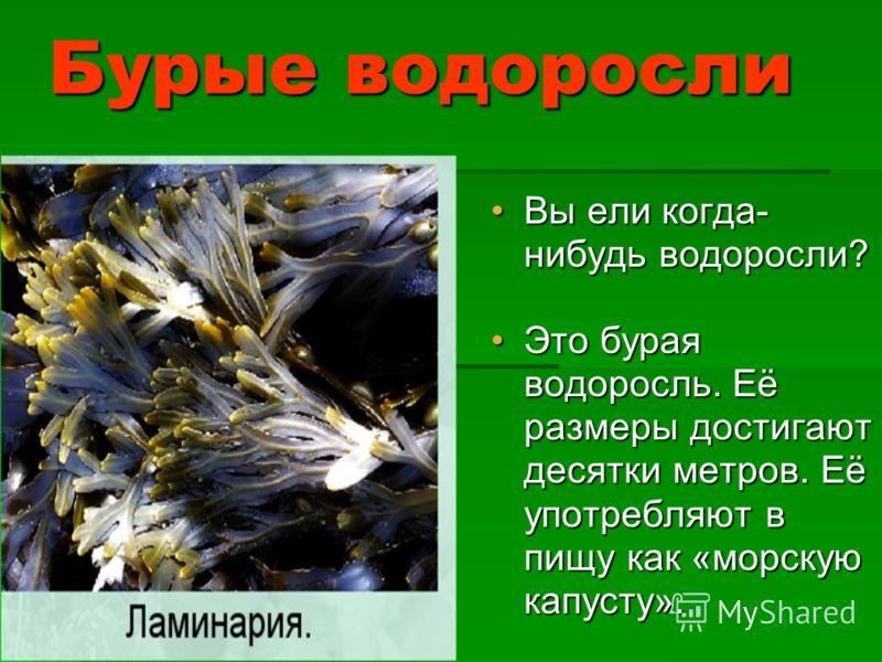 Красные и бурые водоросли В подводном мире можно встретить водорослей разного цвета.В подводном мире можно встретить водорослей разного цвета.