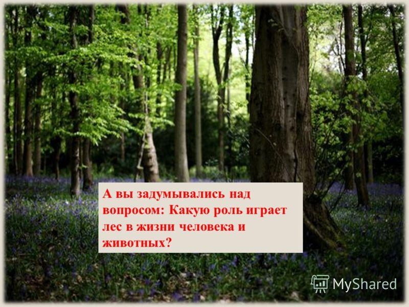 А вы задумывались над вопросом: Какую роль играет лес в жизни человека и животных?