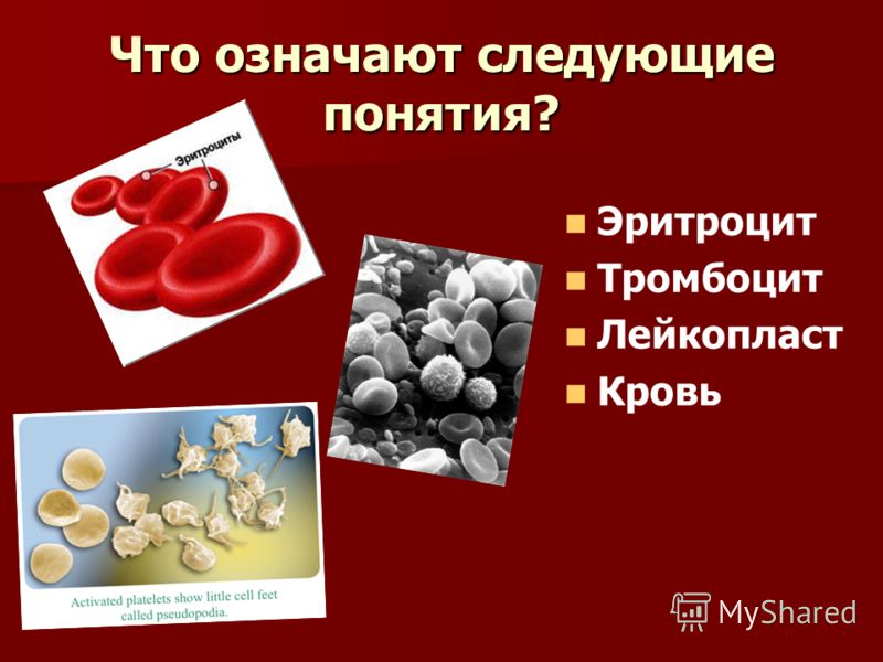 Что означают следующие понятия? Эритроцит Тромбоцит Лейкопласт Кровь