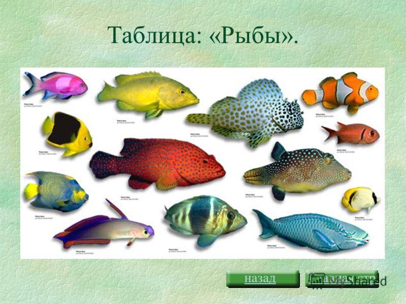 Таблица насыщенности цветов Урок 2Урок 3Урок 4Урок 7Урок 8 Главная стр.