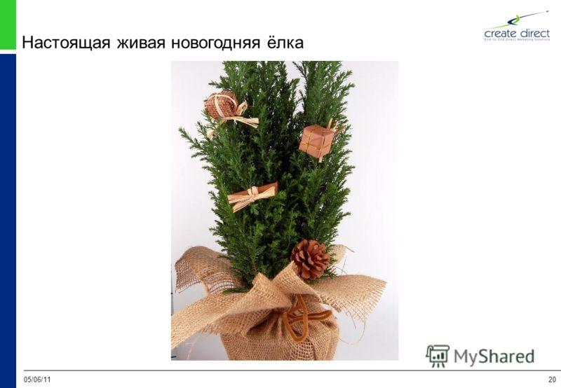 05/06/1120 Настоящая живая новогодняя ёлка