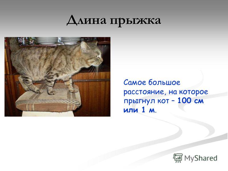 Самое большое расстояние, на которое прыгнул кот – 100 см или 1 м. Длина прыжка