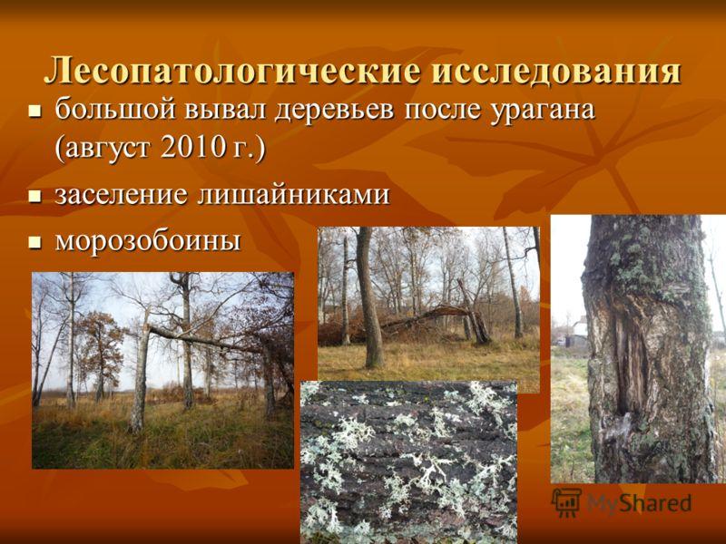 Лесопатологические исследования большой вывал деревьев после урагана (август 2010 г.) большой вывал деревьев после урагана (август 2010 г.) заселение лишайниками заселение лишайниками морозобоины морозобоины