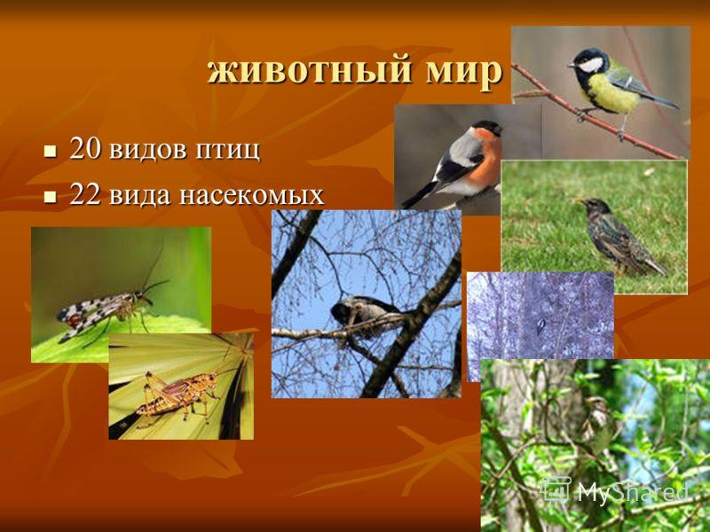 животный мир 20 видов птиц 20 видов птиц 22 вида насекомых 22 вида насекомых