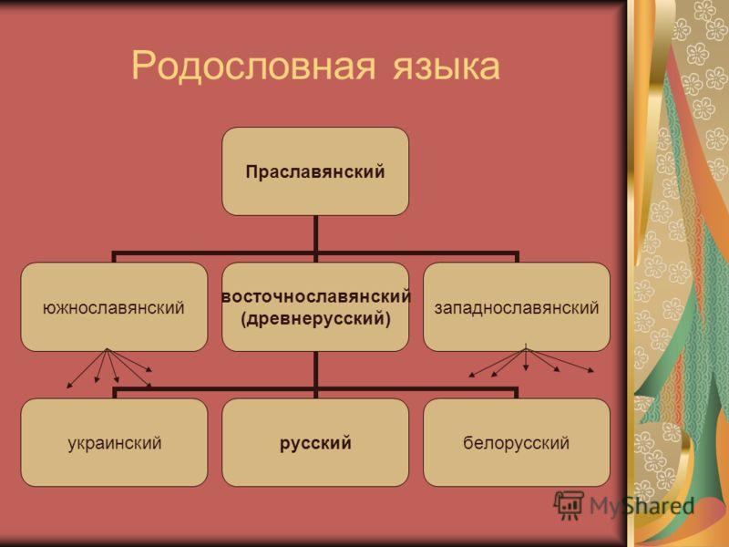 Родословная языка Праславянский южнославянский восточнославянский (древнерусский) украинскийрусскийбелорусский западнославянский