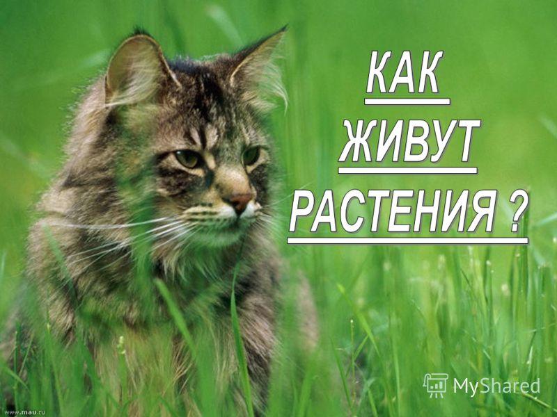 http://www.deti-66.ru/ «Детский исследовательский проект»