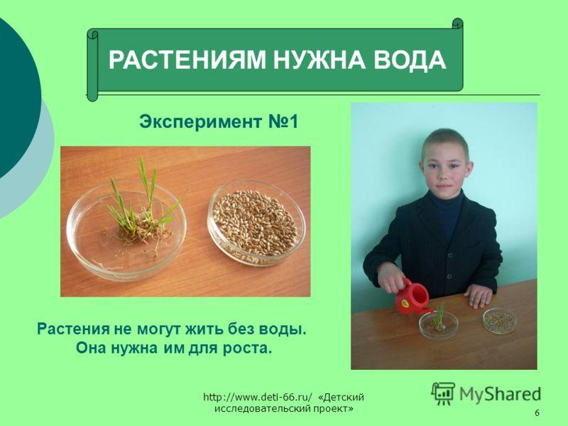 http://www.deti-66.ru/ «Детский исследовательский проект» 6 РАСТЕНИЯМ НУЖНА ВОДА Эксперимент 1 Растения не могут жить без воды. Она нужна им для роста.