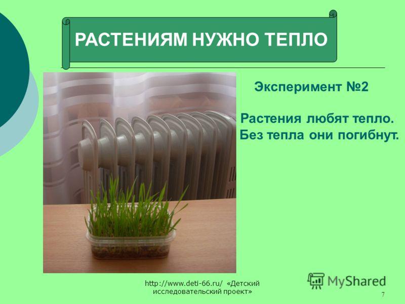 http://www.deti-66.ru/ «Детский исследовательский проект» 7 РАСТЕНИЯМ НУЖНО ТЕПЛО Эксперимент 2 Растения любят тепло. Без тепла они погибнут.