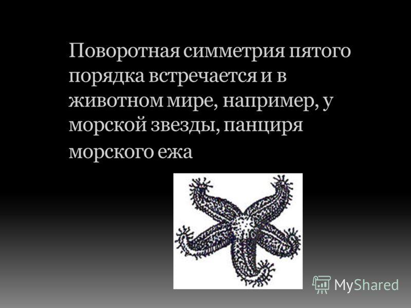 Поворотная симметрия пятого порядка встречается и в животном мире, например, у морской звезды, панциря морского ежа