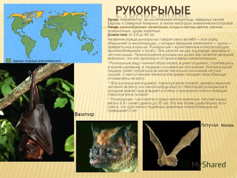 Ареал: повсеместно, за исключением Антарктиды, северных частей Европы и Северной Америки, а также некоторых океанических островов Пища: разнообразная: насекомые, плоды и нектар цветов, мелкие позвоночные, кровь животных. Длина тела: от 2,8 до 40 см Н