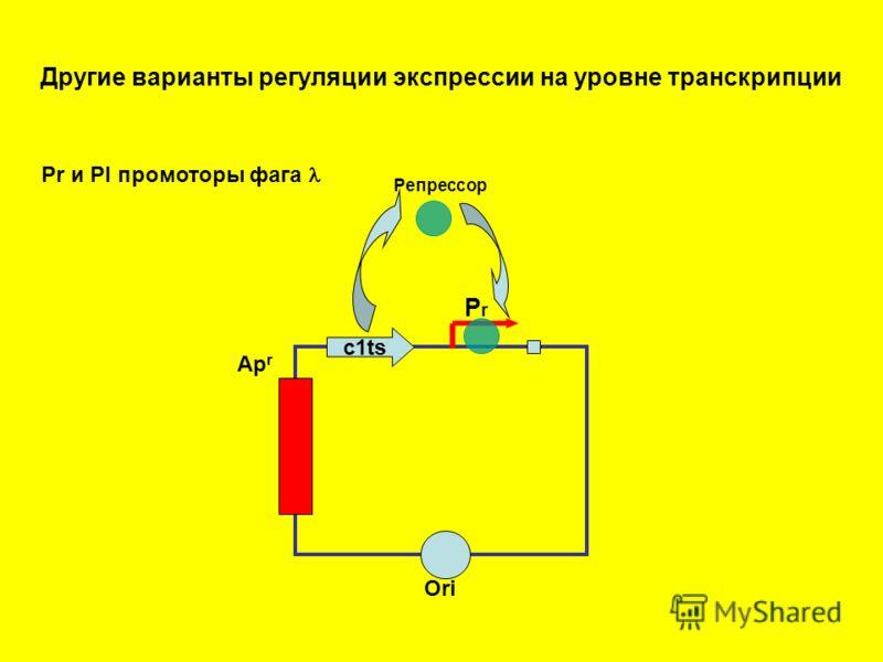 Другие варианты регуляции экспрессии на уровне транскрипции Ori Ap r РrРr c1ts Pr и Pl промоторы фага Репрессор