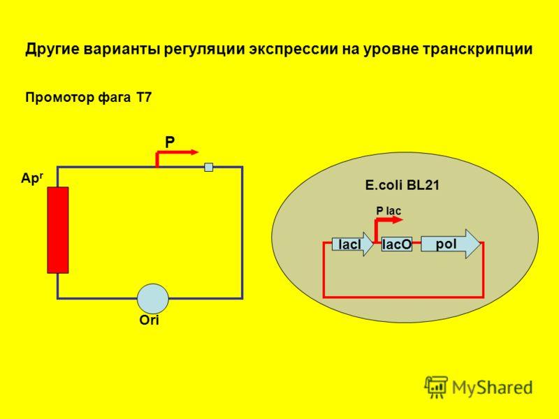 Другие варианты регуляции экспрессии на уровне транскрипции Ori Ap r Р Промотор фага Т7 pol lacO lacI E.coli BL21 P lac