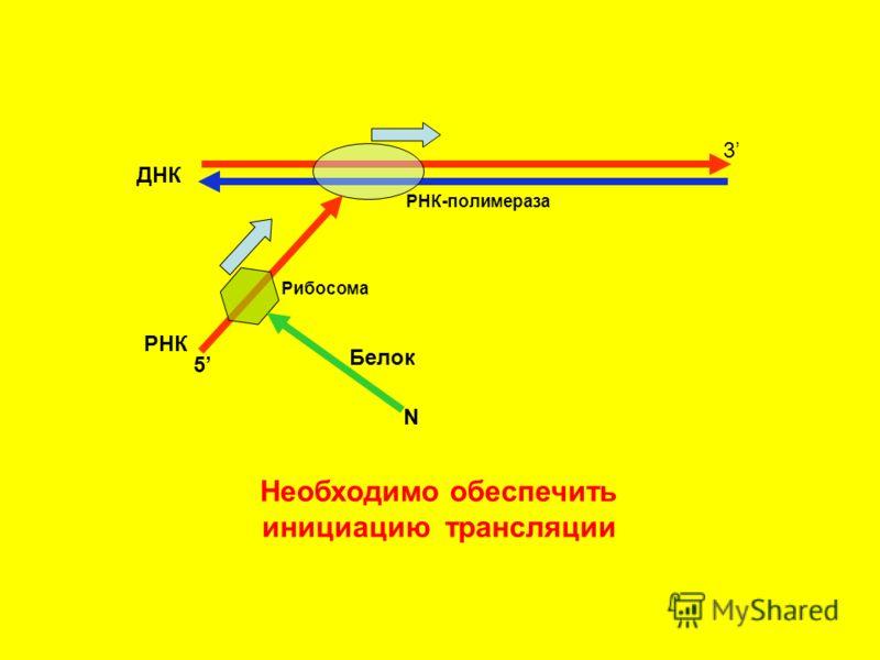 ДНК 3 РНК-полимераза РНК 5 Рибосома N Белок Необходимо обеспечить инициацию трансляции