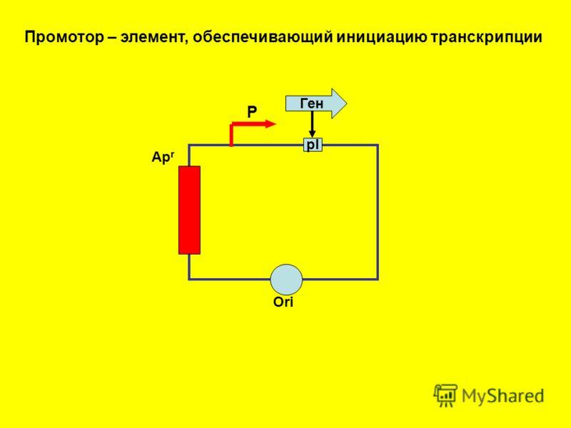 Ori Ap r pl Ген Промотор – элемент, обеспечивающий инициацию транскрипции Р