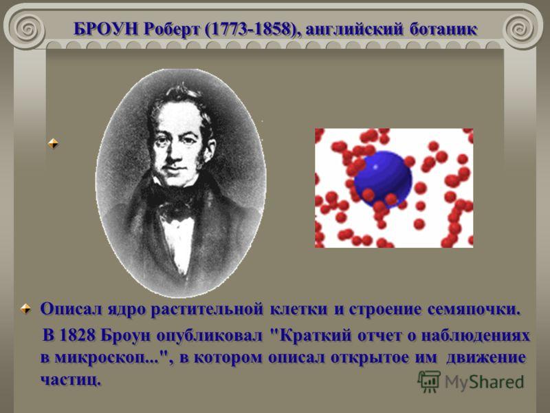 БРОУН Роберт (1773-1858), английский ботаник Описал ядро растительной клетки и строение семяпочки. В 1828 Броун опубликовал