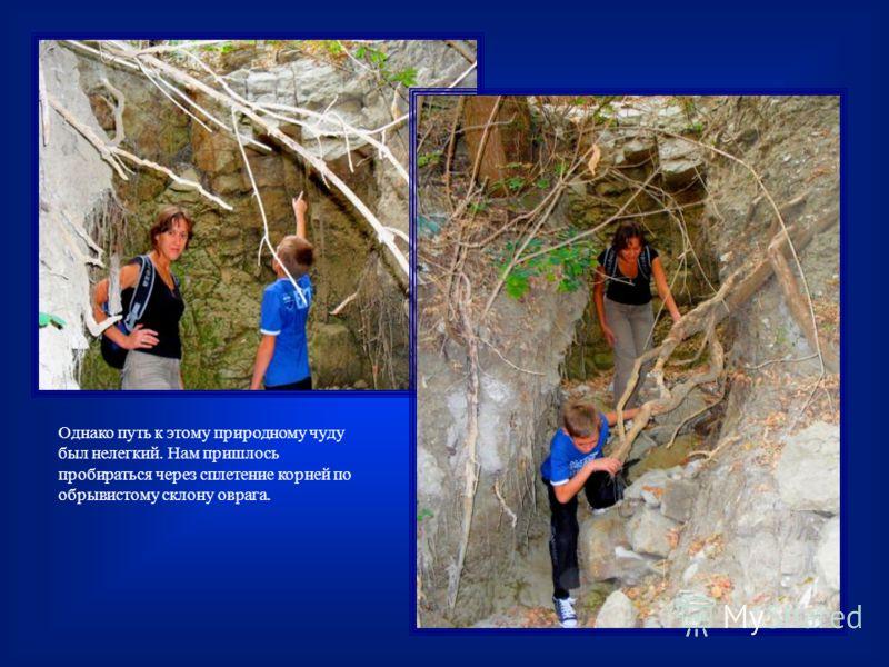 Однако путь к этому природному чуду был нелегкий. Нам пришлось пробираться через сплетение корней по обрывистому склону оврага.