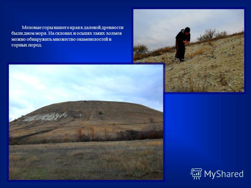 Меловые горы нашего края в далекой древности были дном моря. На склонах и осыпях таких холмов можно обнаружить множество окаменелостей и горных пород.