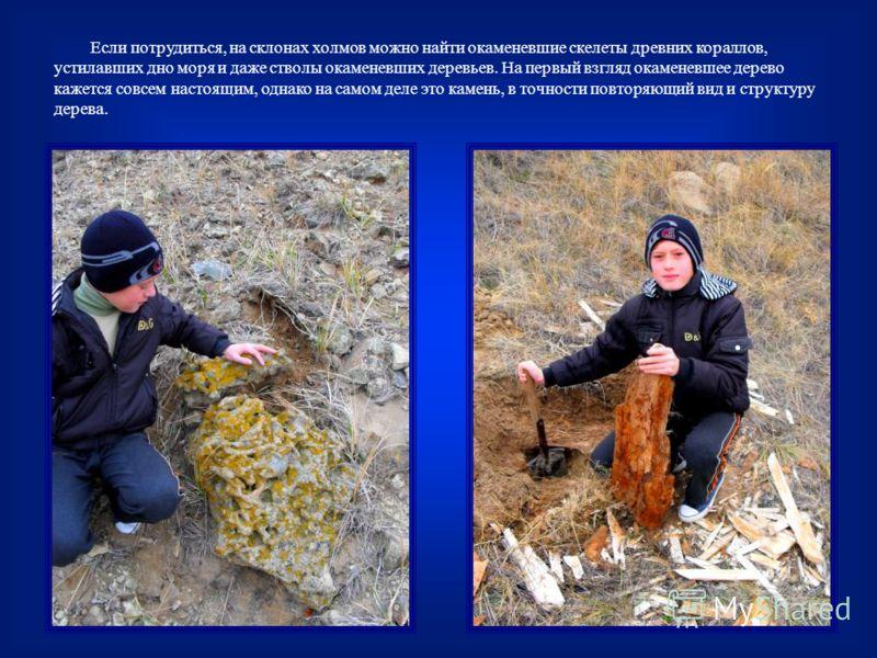 Если потрудиться, на склонах холмов можно найти окаменевшие скелеты древних кораллов, устилавших дно моря и даже стволы окаменевших деревьев. На первый взгляд окаменевшее дерево кажется совсем настоящим, однако на самом деле это камень, в точности по