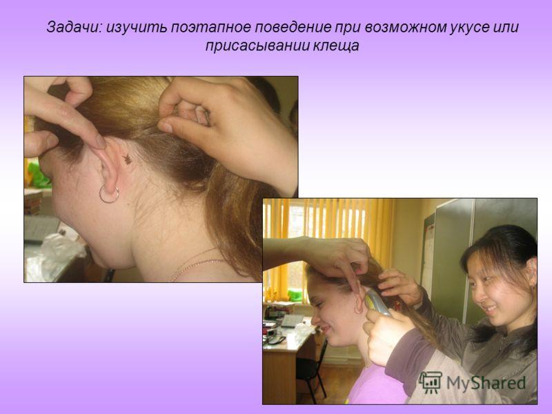 Задачи: изучить поэтапное поведение при возможном укусе или присасывании клеща