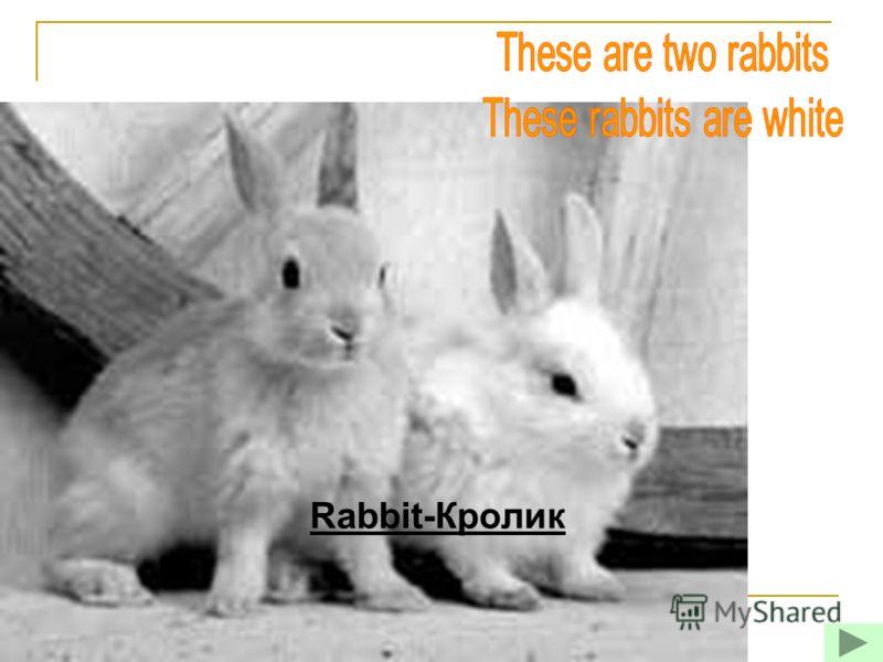 Rabbit-Кролик