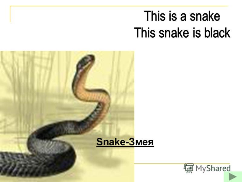 Snake-Змея