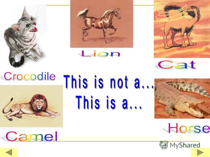Is it true ???