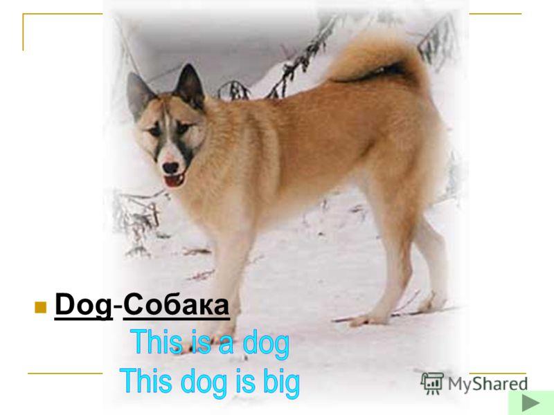 Dog-Собака