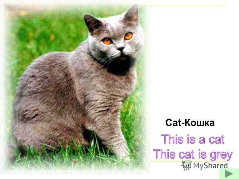 Cat-Кошка