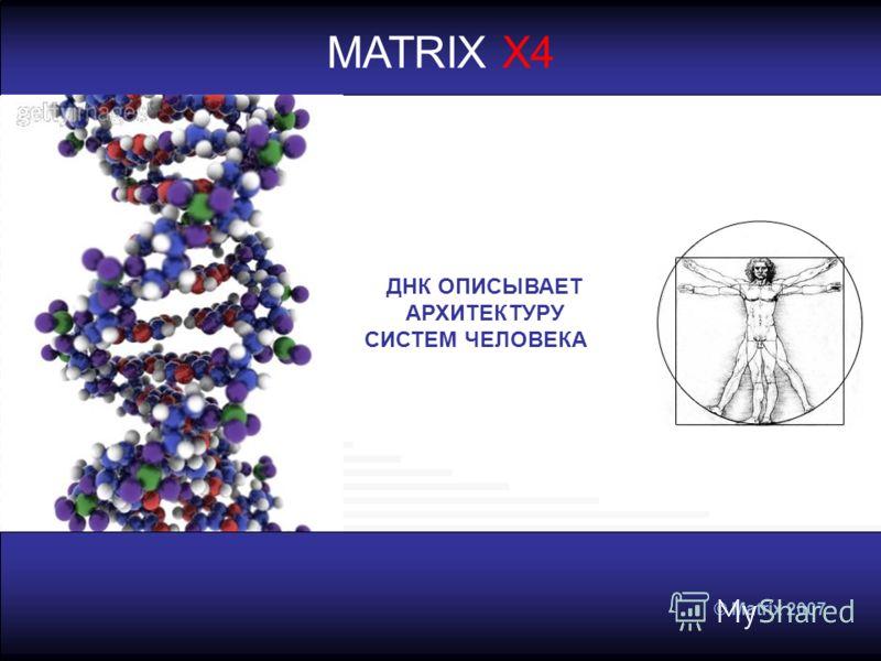 © Matrix 2007 MATRIX X4 ДНК ОПИСЫВАЕТ АРХИТЕКТУРУ СИСТЕМ ЧЕЛОВЕКА