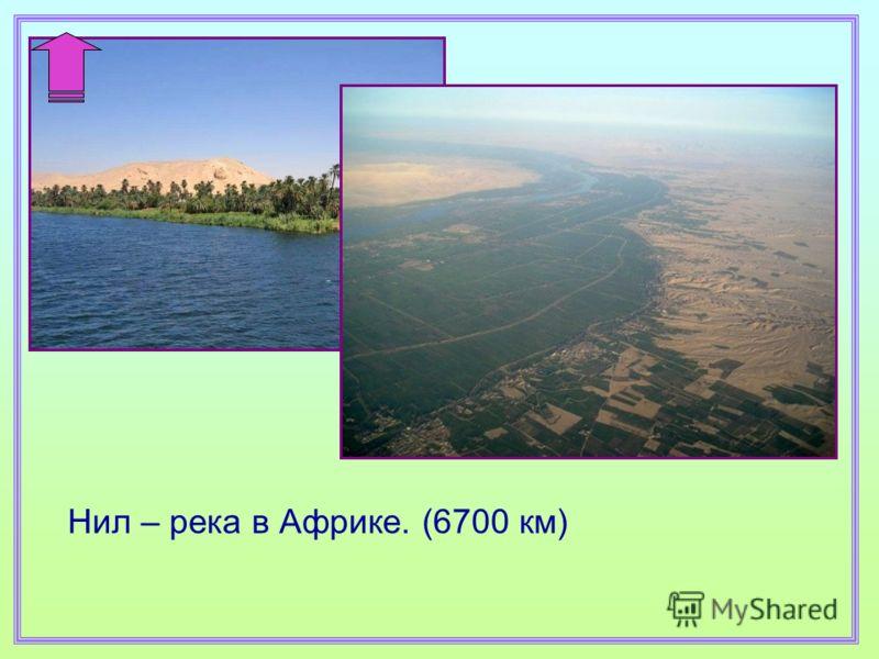 Нил – река в Африке. (6700 км)