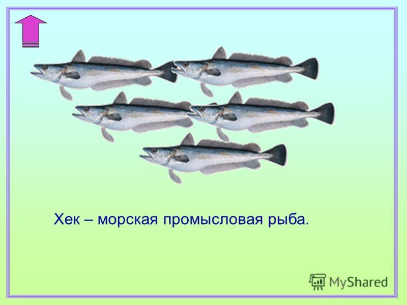 Хек – морская промысловая рыба.