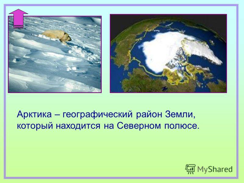 Арктика – географический район Земли, который находится на Северном полюсе.