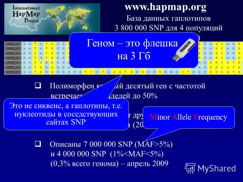 www.hapmap.org База данных гаплотипов 3 800 000 SNP для 4 популяций ( по 100 человек) 18961_c1AATATGCCTTAGAGTGGGTGTAGCACGTATCGCAGCACGG 18963_c2AATATGCCTTAGCGTGGGTGTAGCACGTATCGCAGCACGG 18976_c1AATATGCCTTAGCGTGGGTGTAGCACGTATCGCAGCACGG 19056_c2AATATGCCT